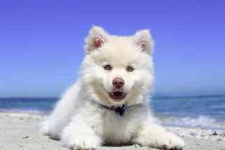 adorable animal beach canine